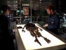 Bones photo 3 (episode s02e08)