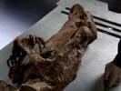 Bones photo 1 (episode s02e09)