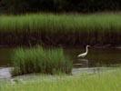 Dawson's Creek photo 7 (episode s03e08)