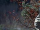Everwood photo 5 (episode s01e11)