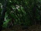 Lost photo 8 (episode s02e15)