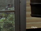The Collector photo 3 (episode s01e12)